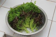 Салат красного коралла в алюминиевой корзине Стоковая Фотография