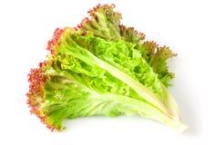 Салат покидает красный цвет Стоковое фото RF