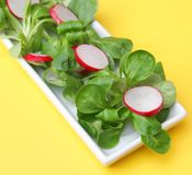 Салат поля с редиской Стоковые Изображения RF