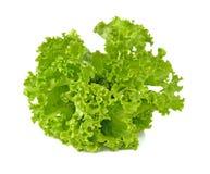 Салат салата изолированный на белой предпосылке Стоковая Фотография