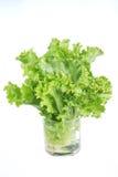 Салат салата на белизне стоковые изображения
