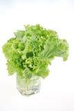 Салат салата на белизне стоковые изображения rf