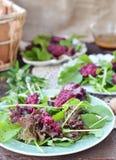 Салат свеклы Стоковые Изображения RF