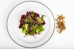 Салат с ростками рож стоковая фотография rf