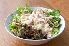 Салат тунца с здоровой шлихтой Стоковые Фото
