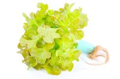 Салат дуба Стоковое Изображение RF