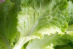 салат шара зеленый Стоковое Изображение