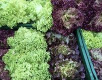 Салат для продажи Стоковое Фото
