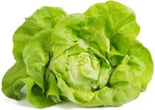 Салат (Lactuca sativa) Стоковые Фото