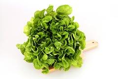 Салат (Lactuca sativa) Стоковые Изображения
