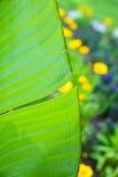 Сад банана Стоковая Фотография RF