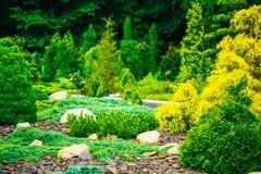 Сад благоустраивая дизайн Цветник, зеленые деревья стоковое изображение rf