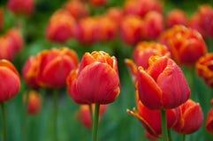 Сад весной Стоковое Фото