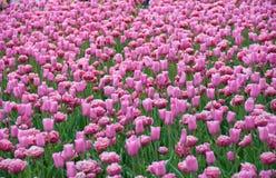 Сад весной Стоковые Изображения