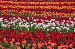 Сад весной Стоковые Изображения RF