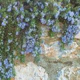Сад весны смертной казни через повешение Стоковые Изображения RF