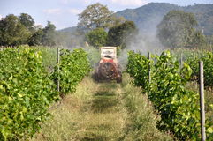 Сад виноградины Стоковые Фото