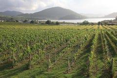 сад виноградины Стоковые Изображения RF