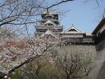 Сад вишневого цвета около японского замка Стоковые Фото