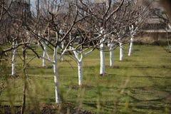 сад вишни в предыдущей весне Стоковая Фотография