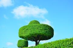 Сад в Бангкоке Стоковое Изображение RF
