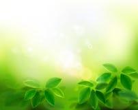 Сад в солнечном свете также вектор иллюстрации притяжки corel бесплатная иллюстрация