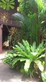 Сад в тайском доме Стоковое Фото