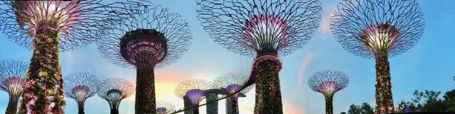 Сад деревьями залива в Сингапуре Стоковые Изображения RF