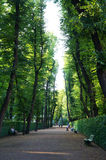 Сад лета Санкт-Петербурга Стоковые Изображения RF