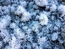 Сад 03 ледяного кристалла Стоковые Фотографии RF