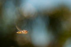Сад завишет муха Стоковые Фото
