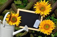 Сад загородки сада солнцецвета Стоковая Фотография