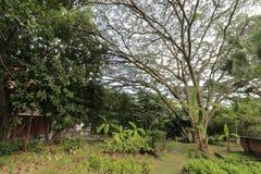 Сад за домом виска nanputuosi Стоковые Изображения RF