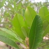 сад листьев шальной природы любя стоковые фотографии rf