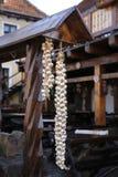 Садит чеснок на мель Стоковое Фото