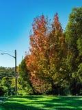 Сад и дерево Стоковые Изображения RF