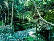 Сад и дерево Стоковые Фотографии RF