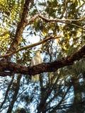 Сад и дерево Стоковая Фотография