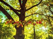 Сад и дерево Стоковое Фото