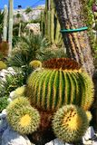 Сад кактуса в деревне Eze Стоковое фото RF