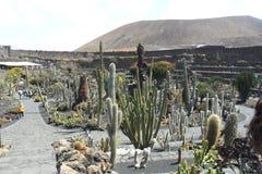 Сад кактуса в острове Лансароте в Канарских островах стоковая фотография rf