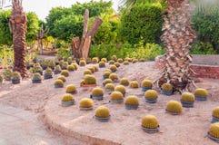 Сад кактуса с множественным заводом кактуса в баках Стоковое Фото