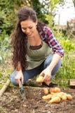 Сад картошки Стоковые Фотографии RF