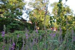 Сад китайца ландшафта горы Стоковое фото RF