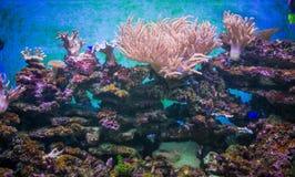 Сад коралла в аквариуме Стоковое Изображение RF