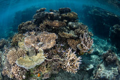 Сад коралла в Фиджи Стоковое фото RF