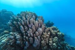 Сад коралла Стоковое фото RF