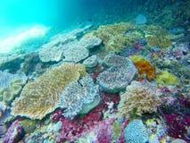 Сад коралла Стоковое Изображение RF