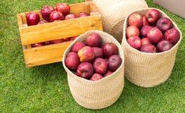 сад корзины яблок здоровый органический Стоковые Фото