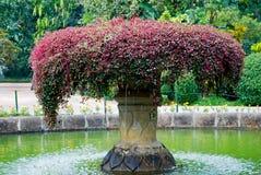 Сад красивого inl фонтана ботанический, Канди, Шри-Ланка Стоковое Изображение